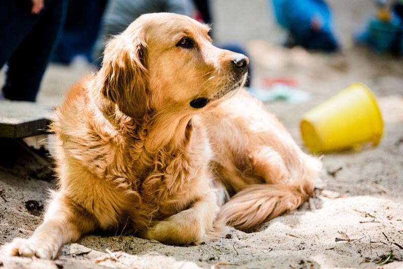 Kita-Hund Balu präsentiert sich der Mitteldeutschen Zeitung